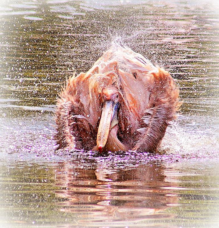 Розовое чудо на воде - Alexander Andronik