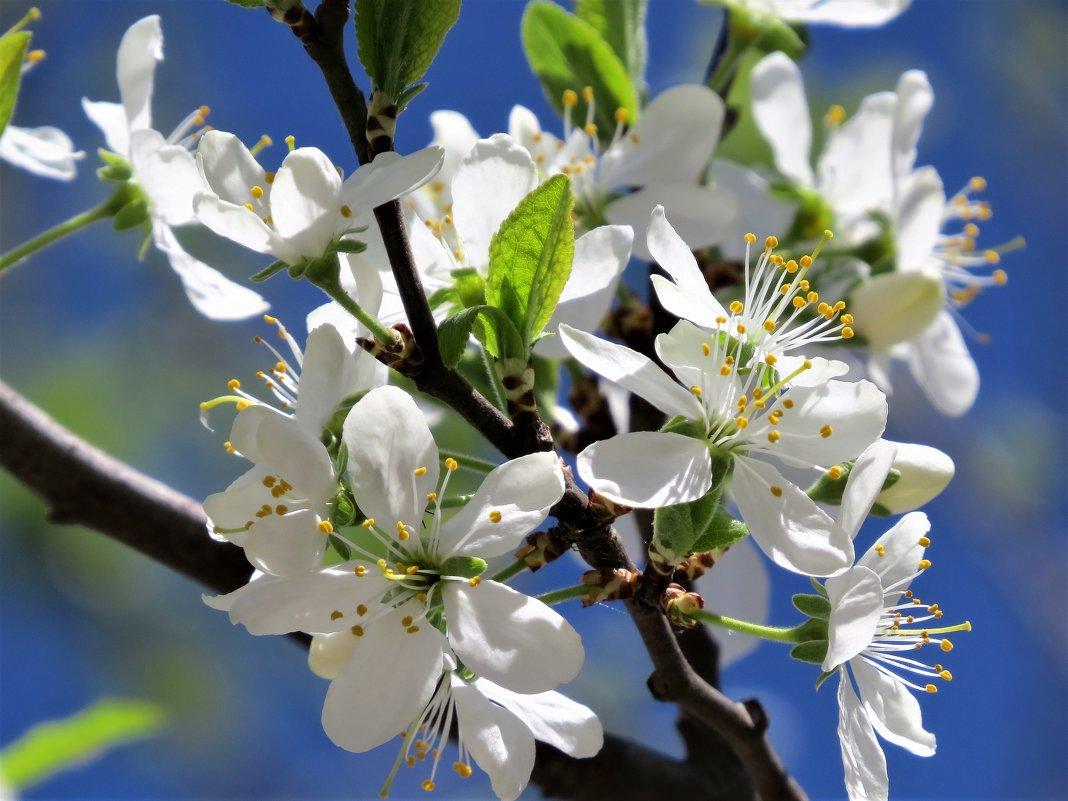 Весна - Маргарита