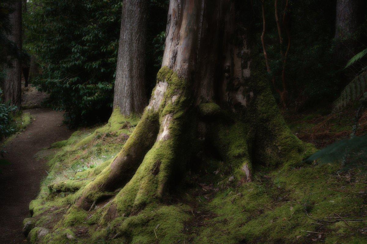 Дерево - SvetlanaScott .