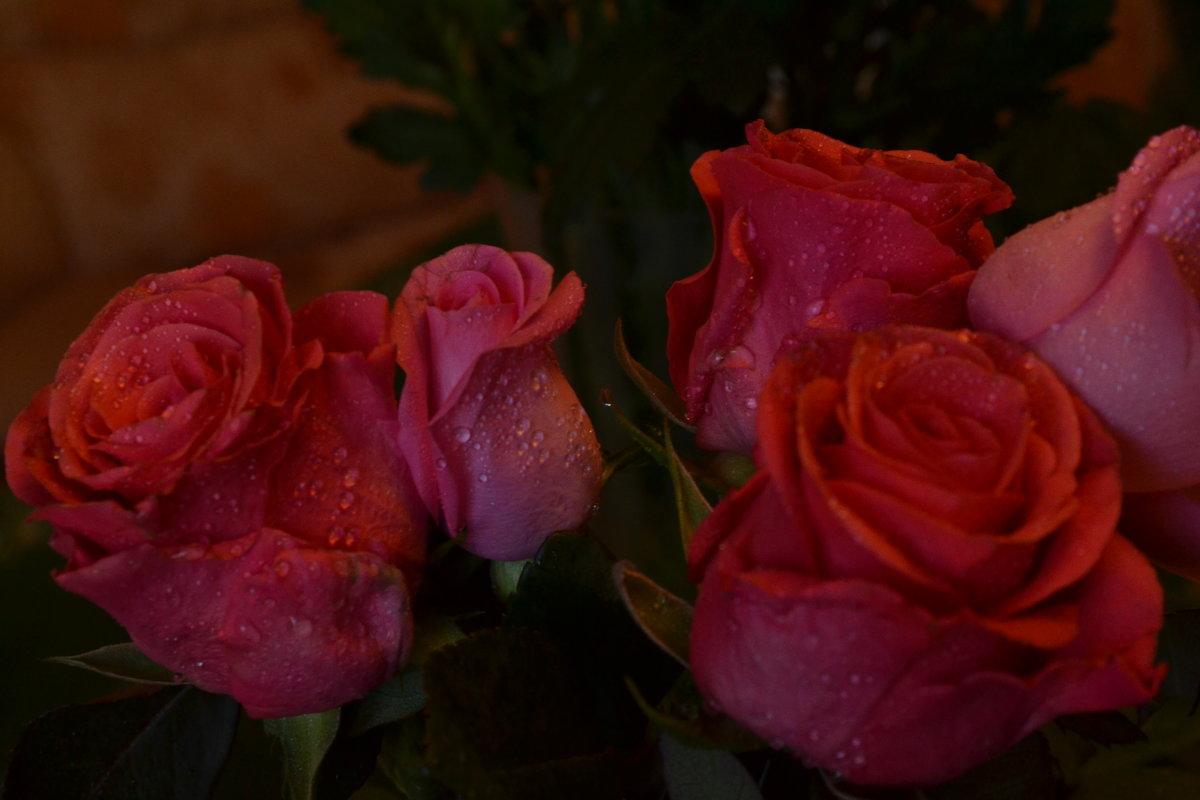 Розовые розы. - zoja