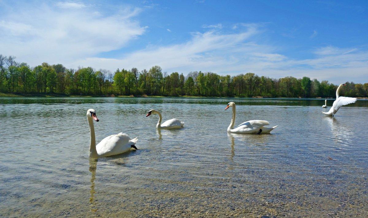 Лебединое озеро! .. - Galina Dzubina