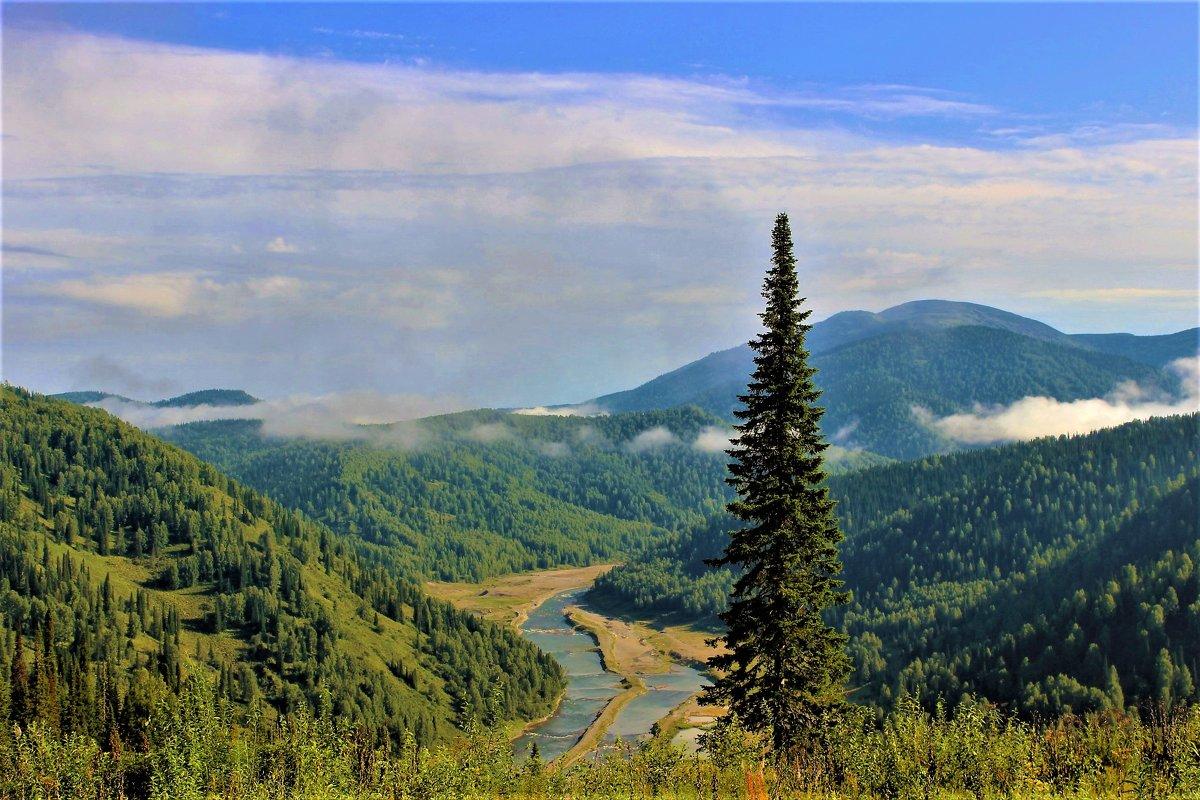 Пейзаж с пихтой и туманом - Сергей Чиняев