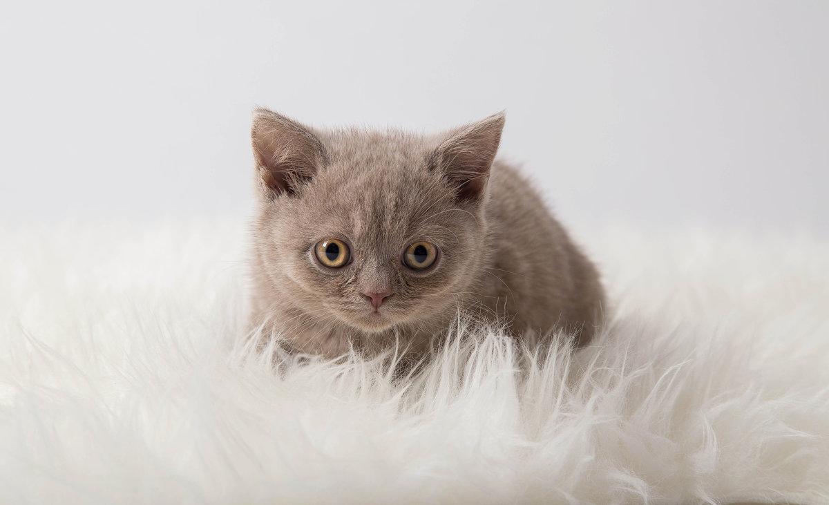 Kittens photoshoot - Anna Aleksandrova