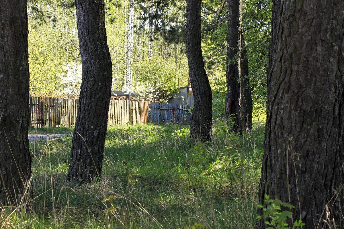 в тени деревьев - оксана