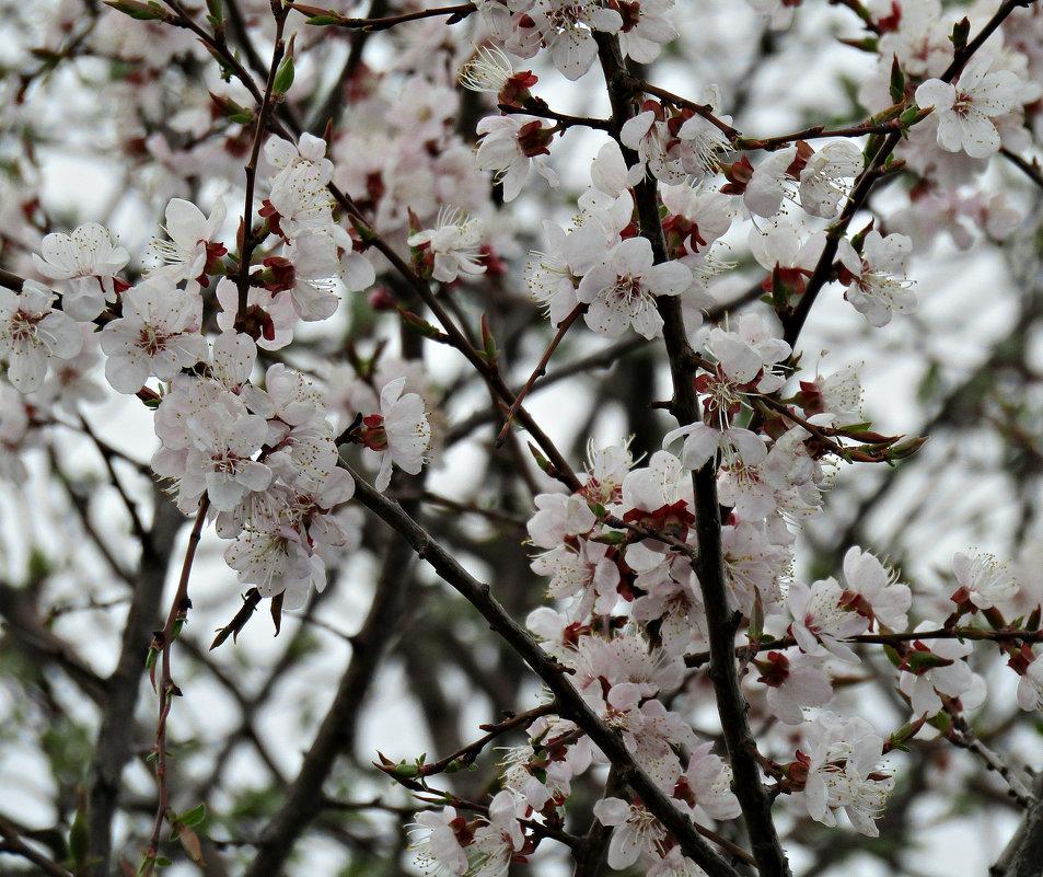 Весна. - наталия