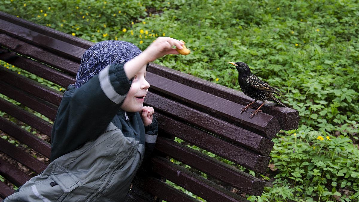 Угощайся птичка - Александр Башлай