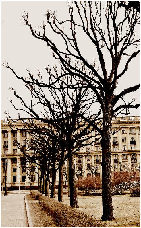 Питерские деревья - Galina Belugina