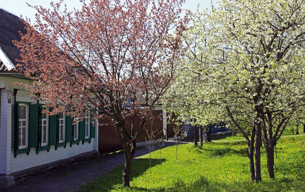 весенние улочки - оксана