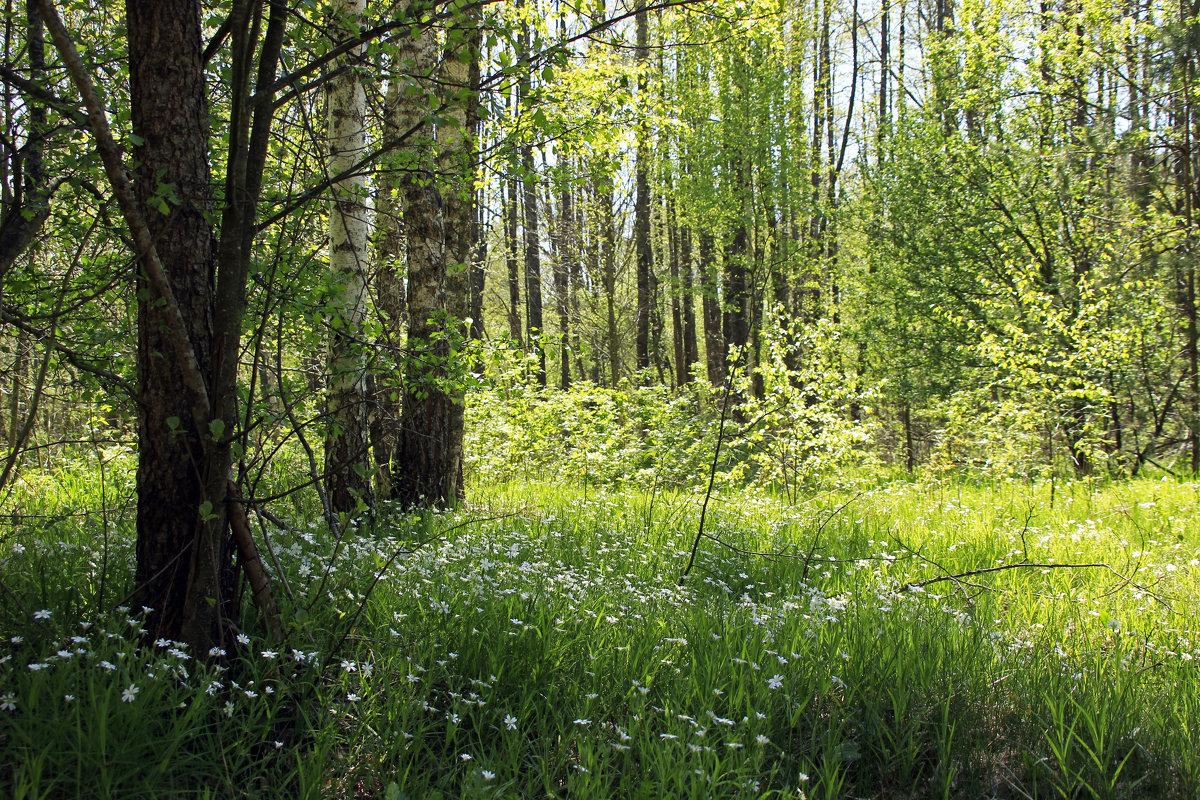 весенний лес - оксана