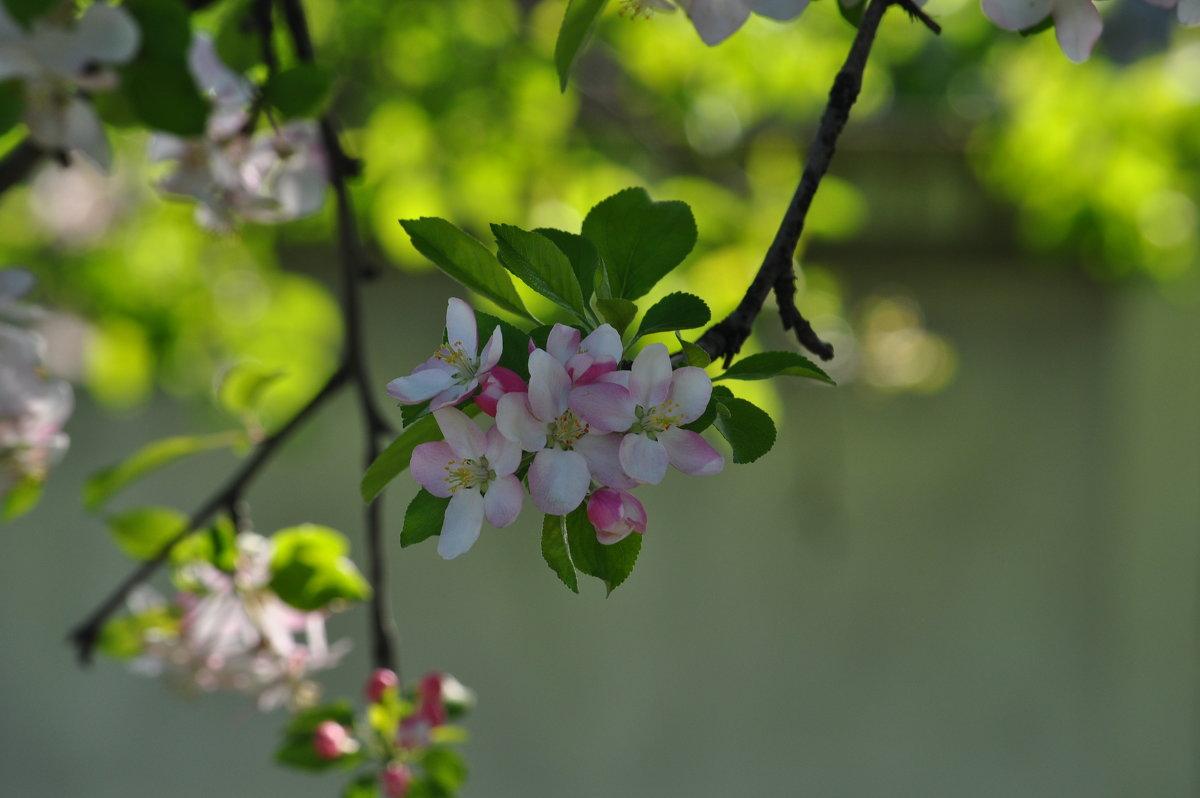 Весна - Анна
