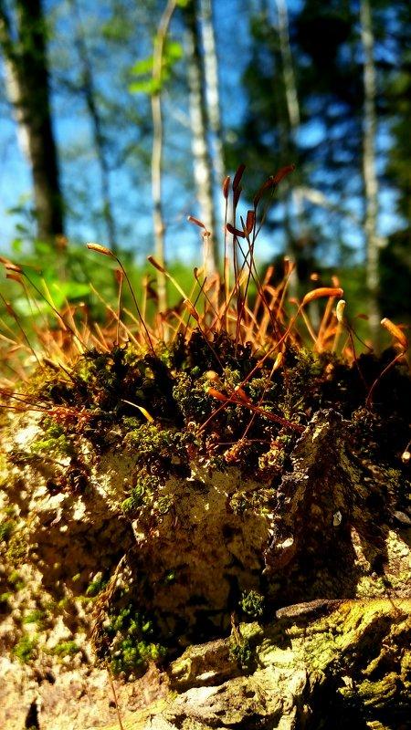 Цветущий мох - Татьяна Черёмухина