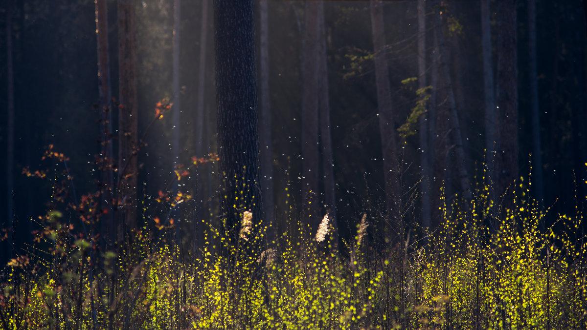Где живут духи леса - Ivanka Ivanka