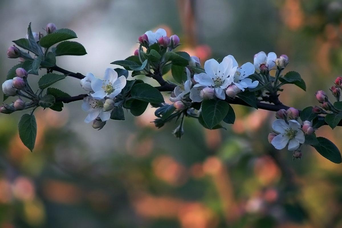 Вечер в яблоневом саду - Екатерина Торганская