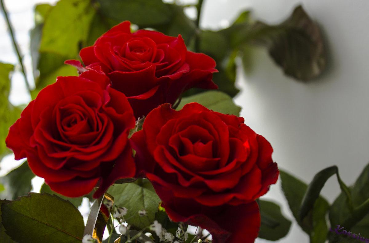 Красные розы - Владимир Беренда