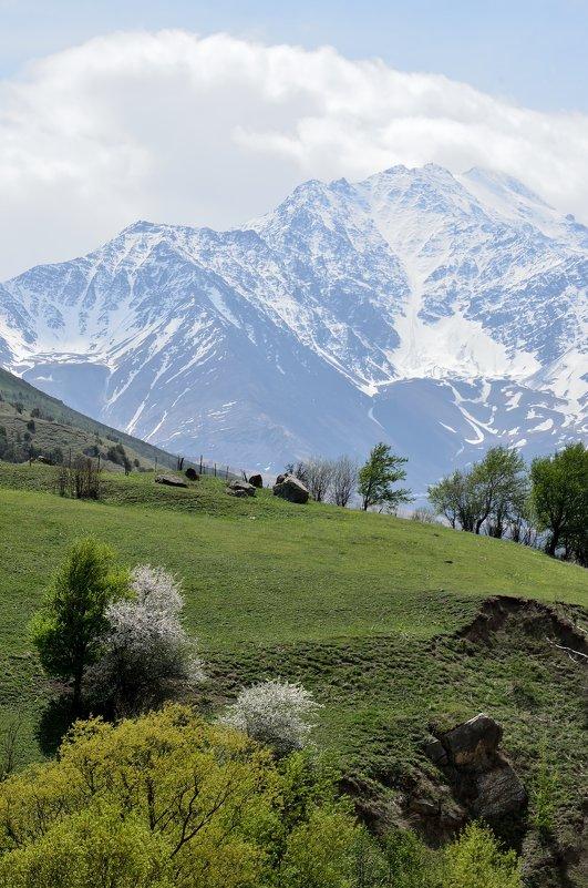 весна в горах - Мария Климова