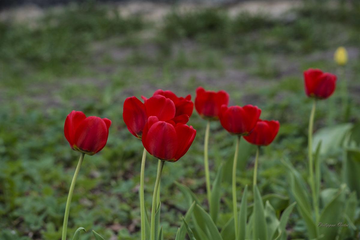 Опять цветочки - Виктор Филиппов