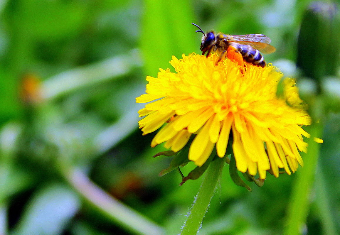Села пчёлка на цветок, добывает вкусный сок. - Валентина ツ ღ✿ღ
