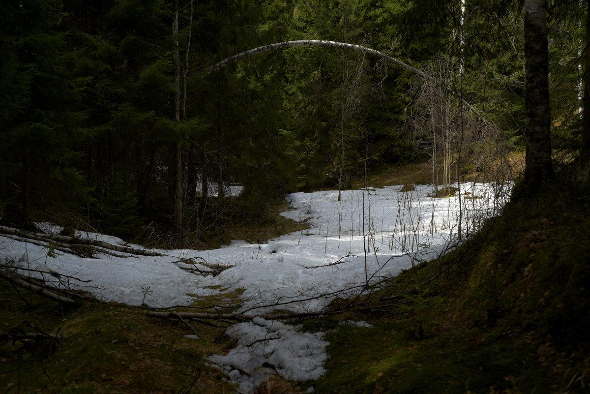 Лесной свод - Таня Бакулина