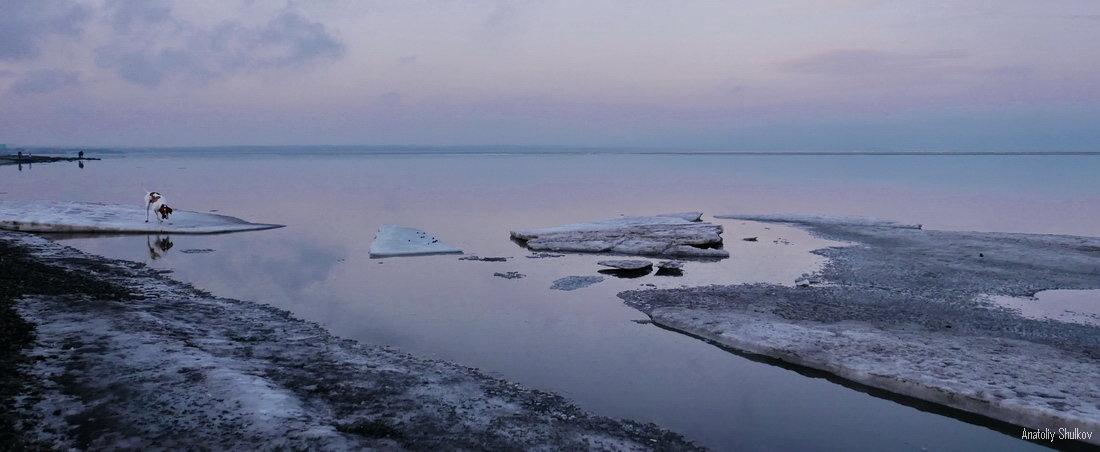 Последний лед - Анатолий Шулков