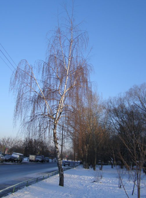 Зима в городе - Анна Воробьева