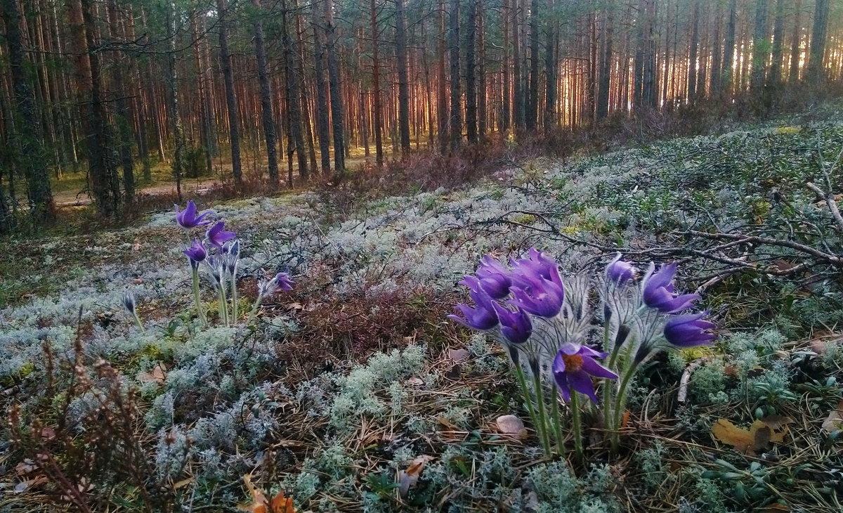 цветы весны - Светлана