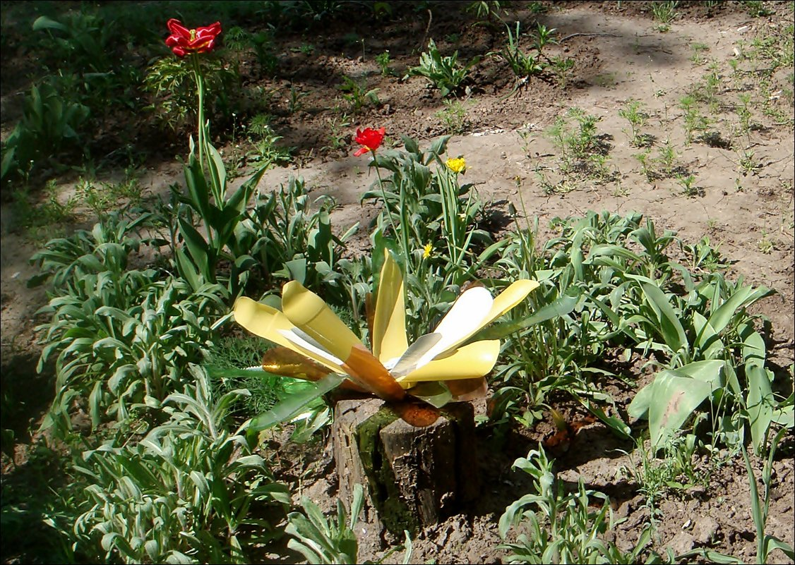 На цветочной грядке - Нина Корешкова