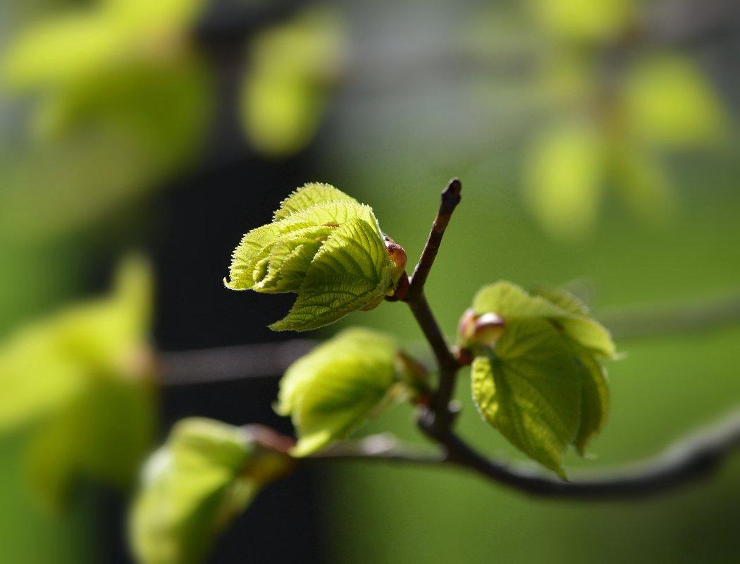 Весна - пора чудес, надежд и пробуждения природы... - Ольга Русанова (olg-rusanowa2010)