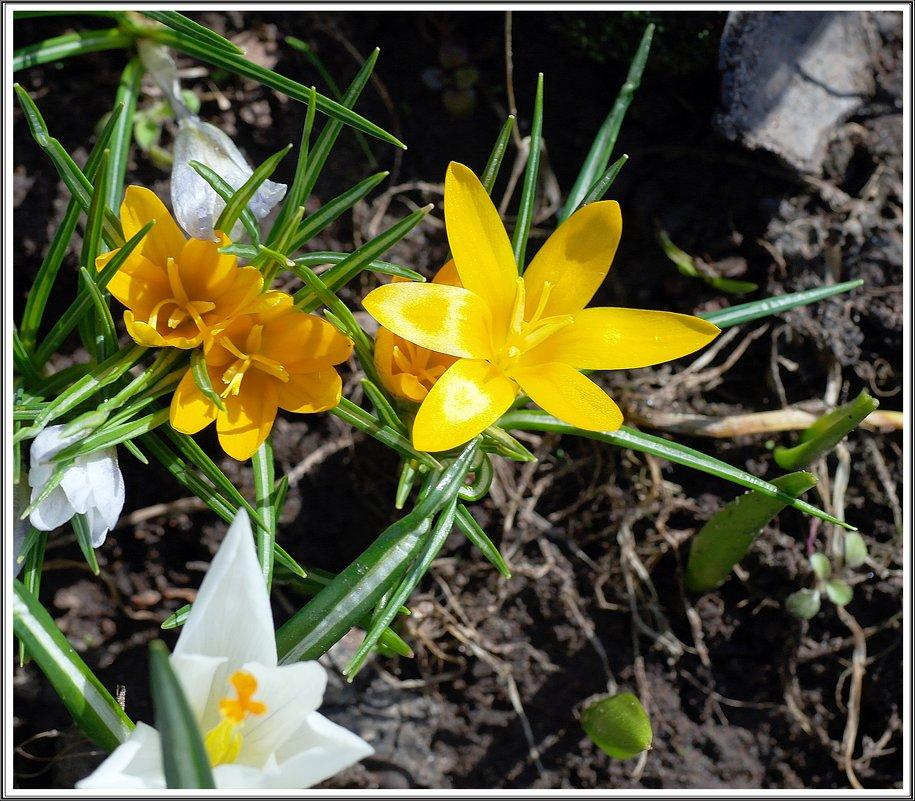 Мгновения весны *** - muh5257