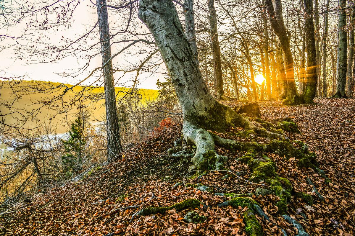 Декабрьский вечер в Тюрингском лесу.................... - Александр Селезнев