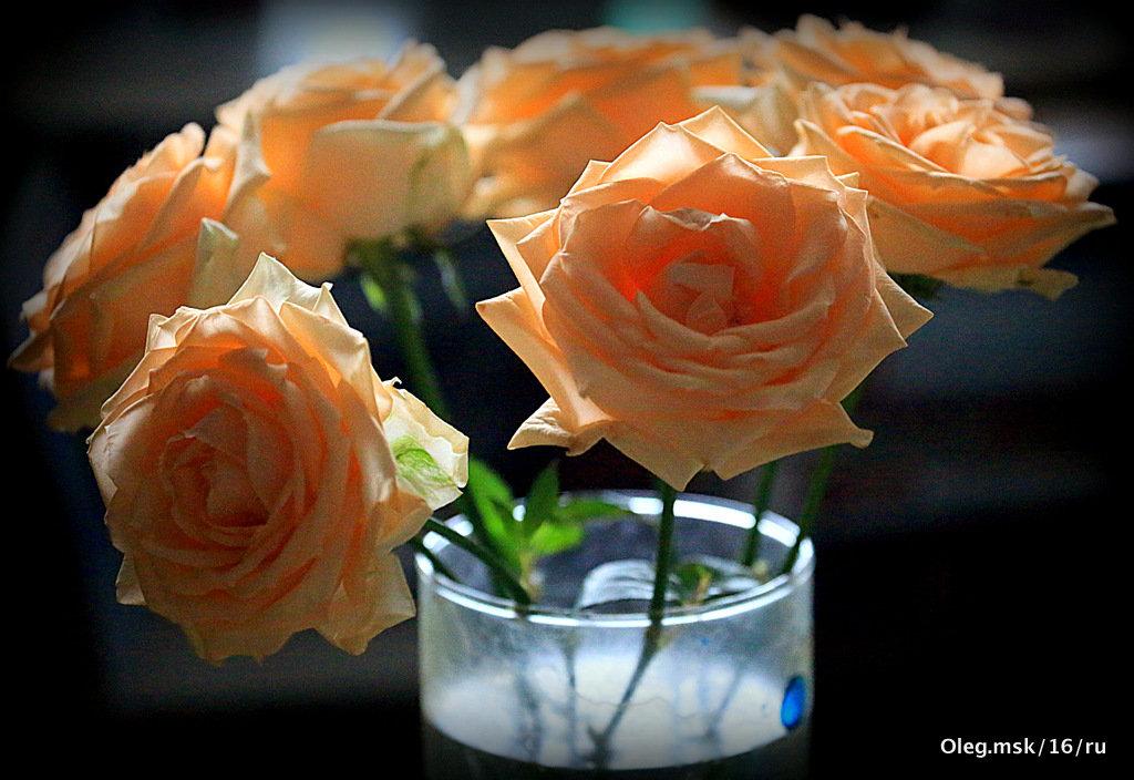 розы для любимых - Олег Лукьянов