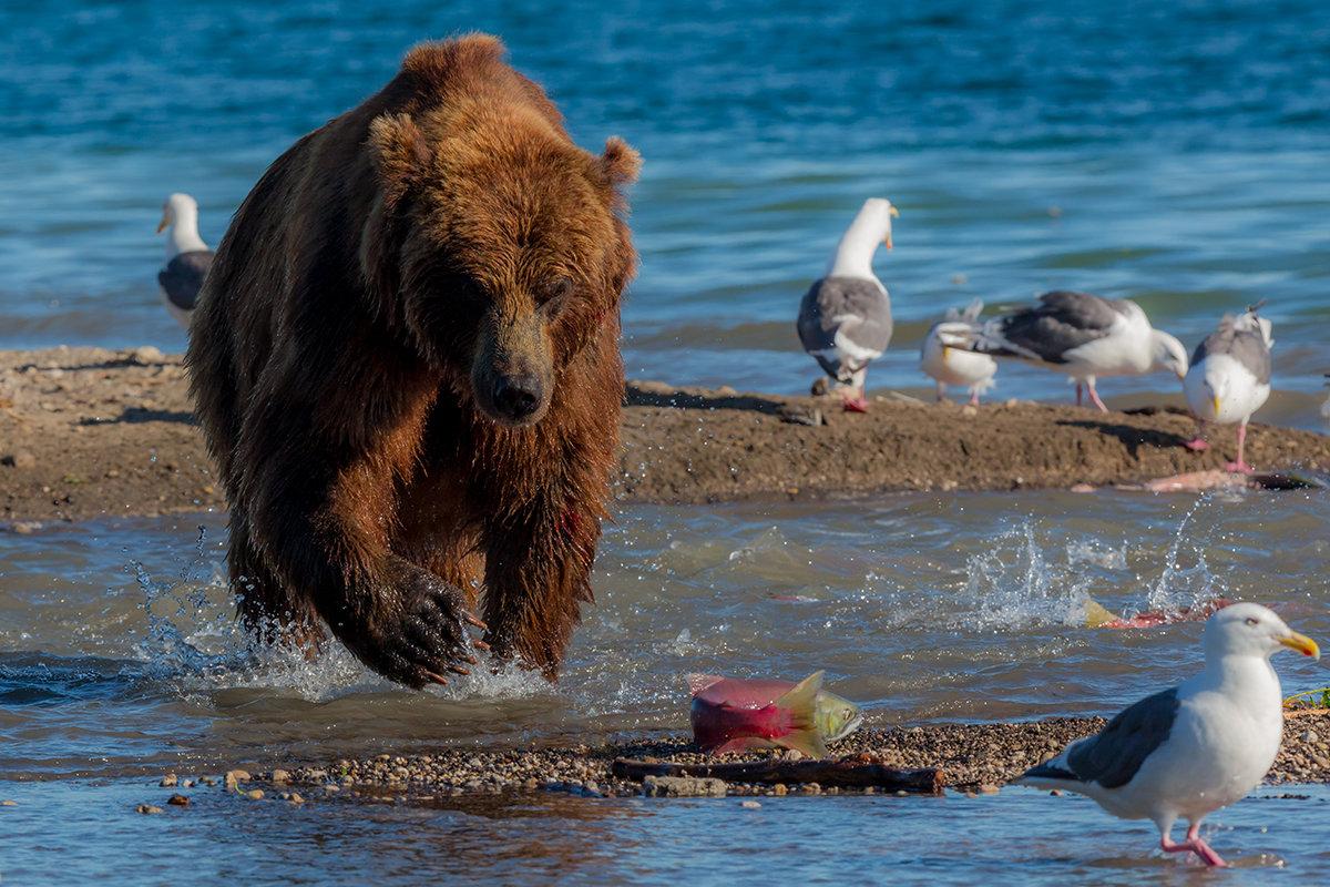 Ленивая рыбалка - Денис Будьков