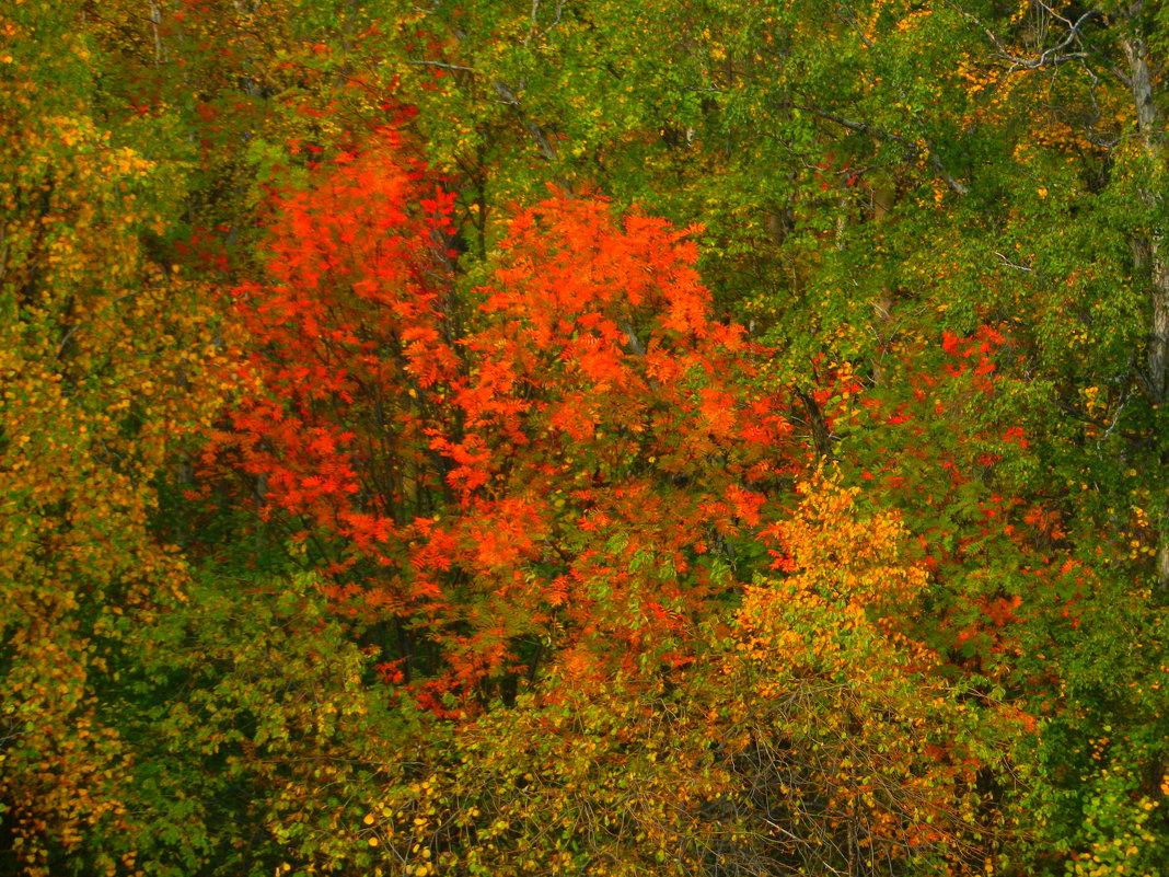 Осенний лес - Юрий Николаев