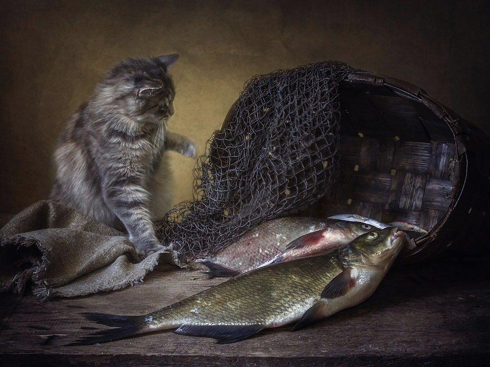Вау, сколько рыбы! - Ирина Приходько