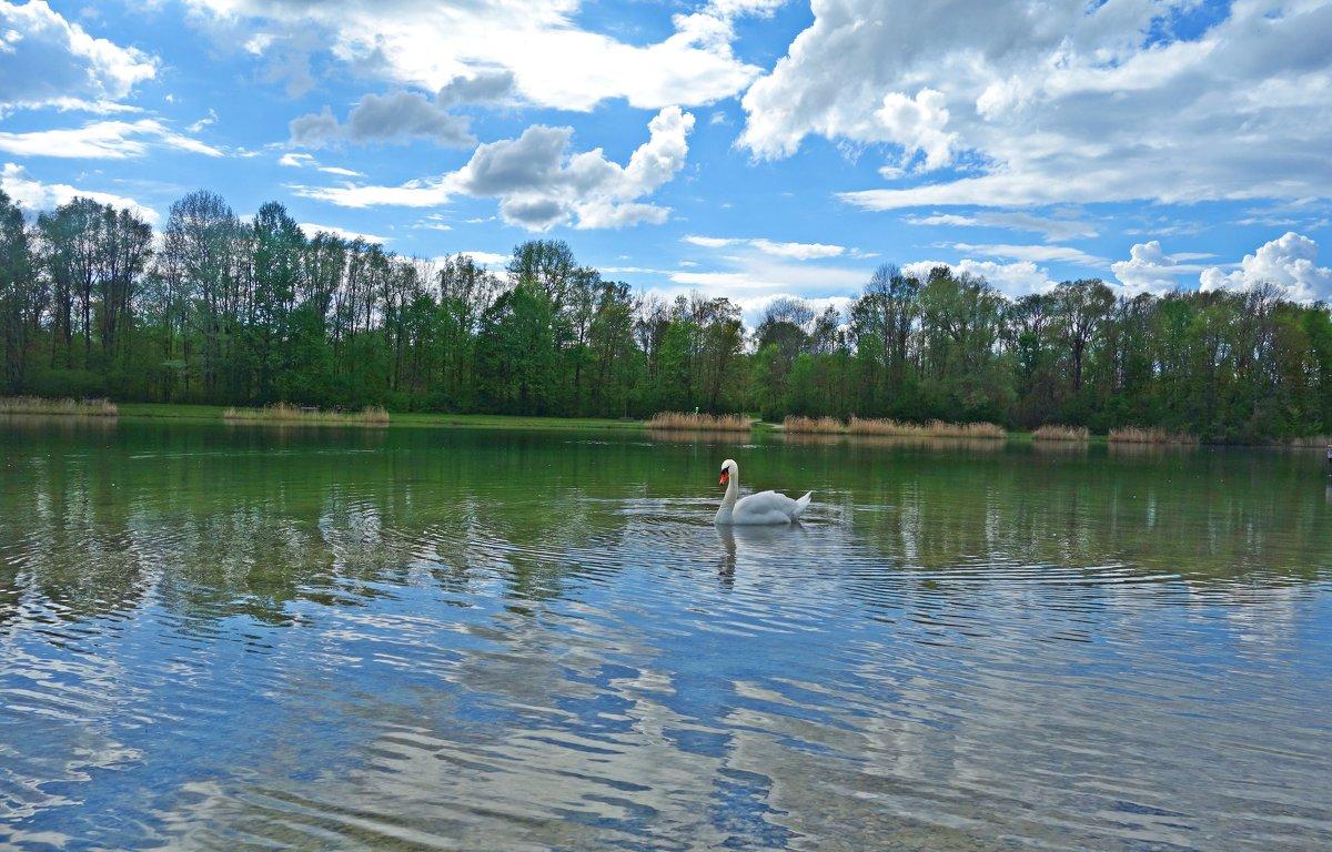 """""""Белый лебедь, лебедь чистый..."""" - Galina Dzubina"""