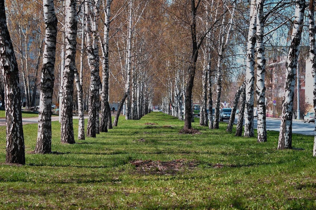 Солнечный майский день. г. Кемерово - Владимир Деньгуб