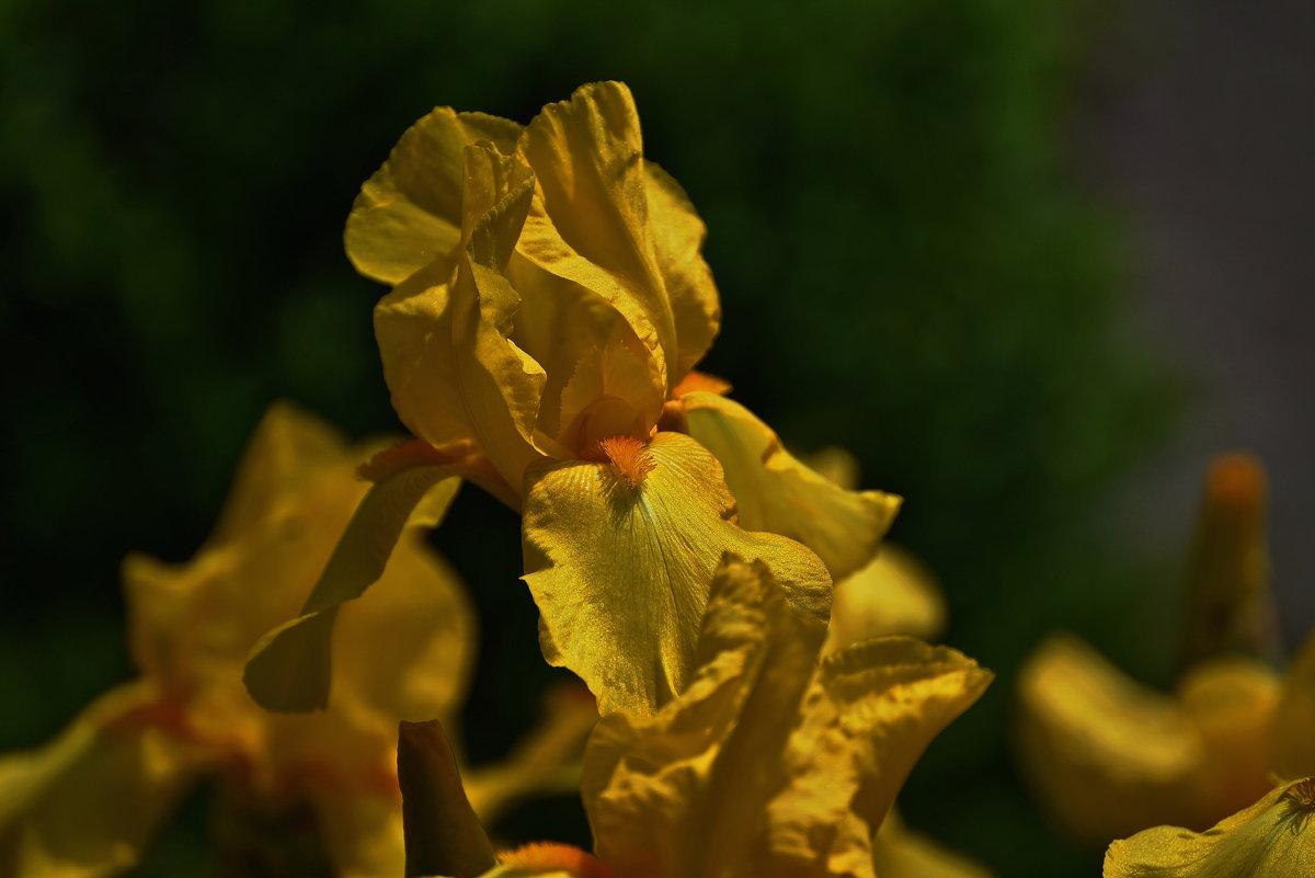 Желтый ... - Владимир Икомацких