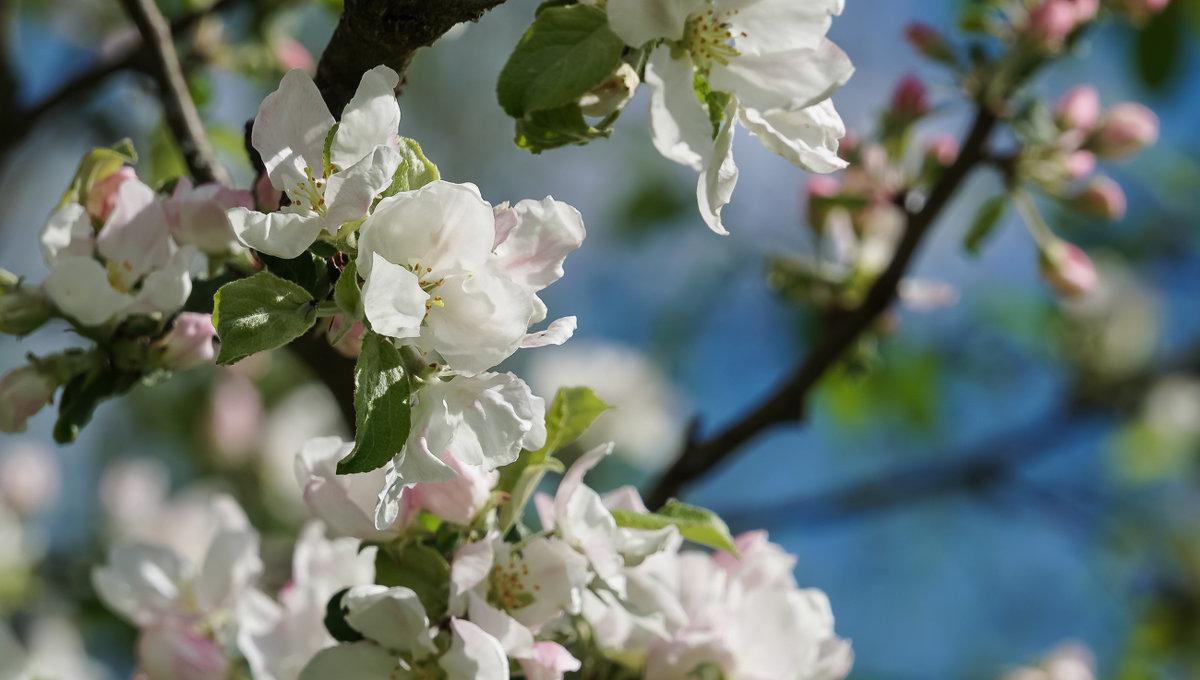 Майские цветы - Владимир Гилясев