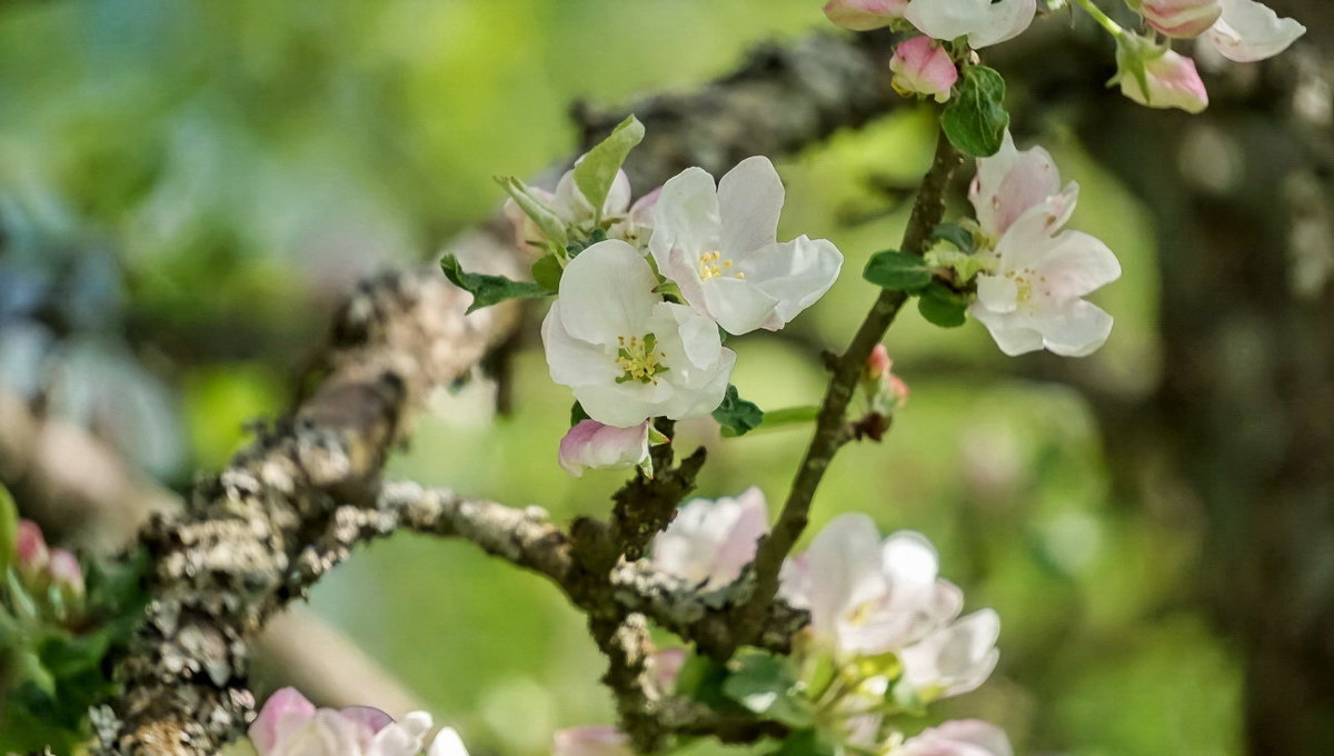 Весенние цветы - Владимир Гилясев