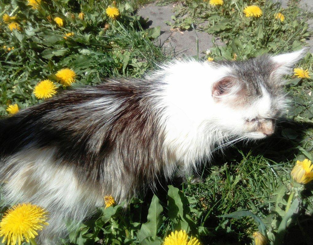 Вышел котик погулять - Сергей Морозов