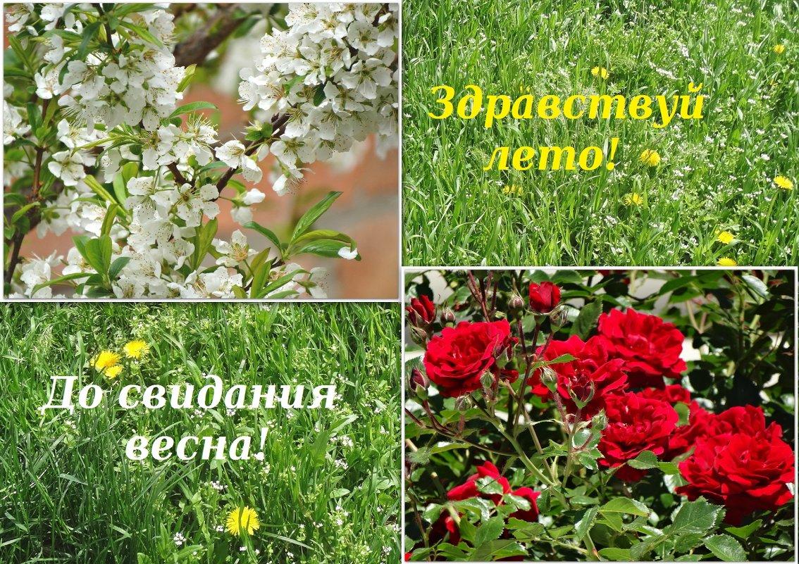 Здравствуй лето!!! - Тамара (st.tamara)