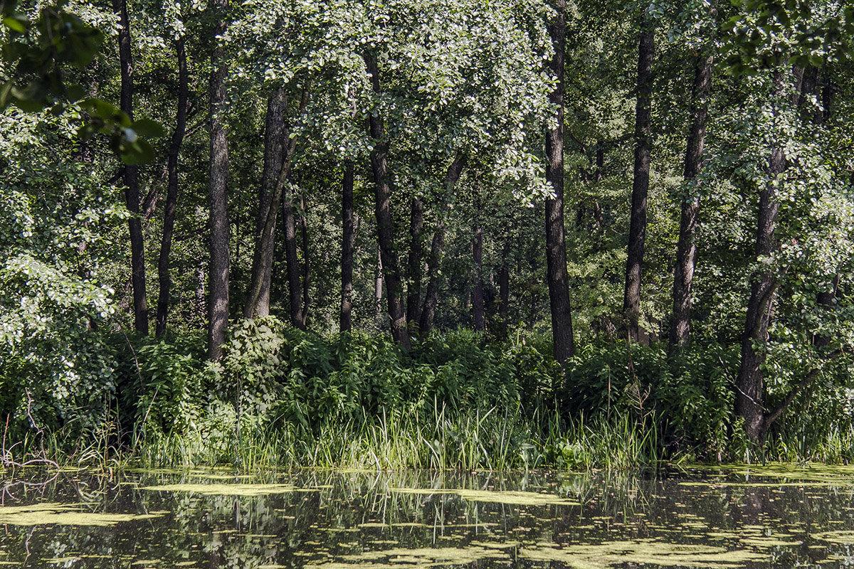 краски леса - Геннадий Свистов