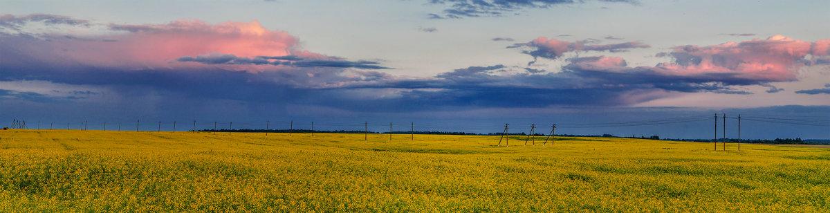 Панорама цветущей люцерны... - Анатолий Клепешнёв