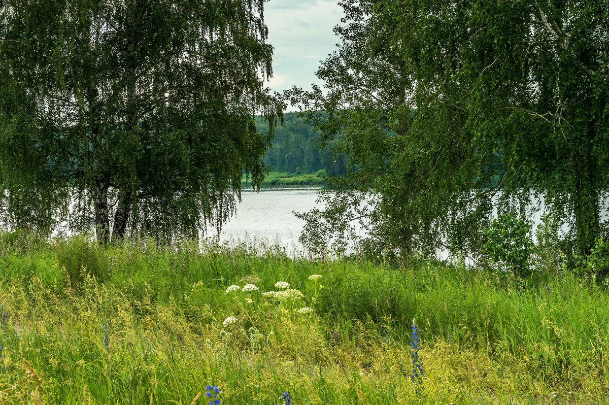 Белые березы у реки стоят... - Владимир Деньгуб