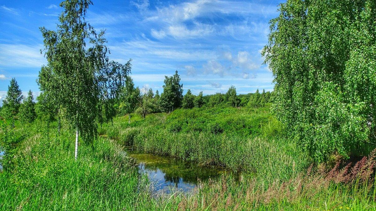 Лесное озерцо - Милешкин Владимир Алексеевич