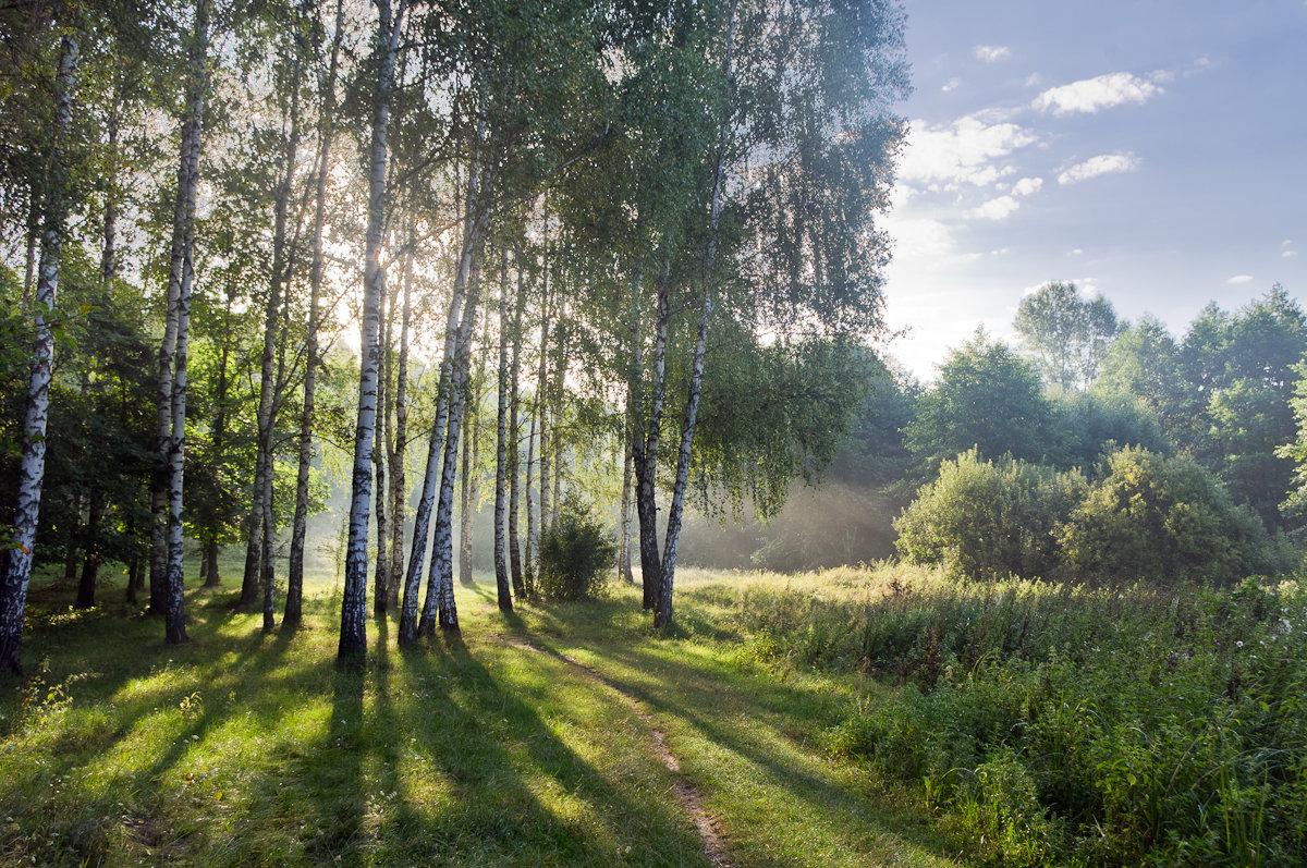 Рассвет на опушке берёзовой рощи - Александр Крупский