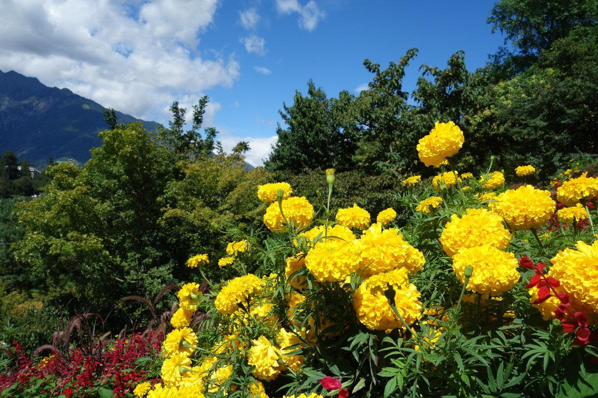 Удивительной красоты сады замка Трауттмансдорф...(Италия) - Galina Dzubina
