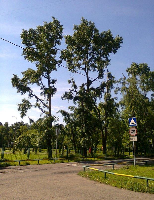 деревья как на юге - Андрей