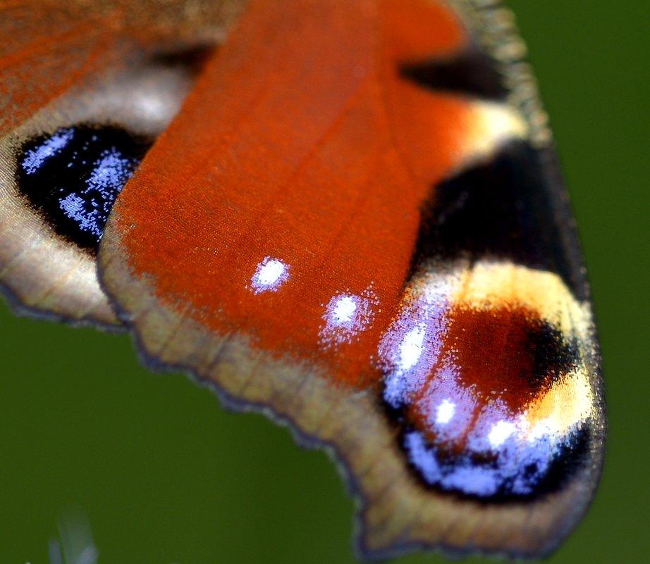 Крыло бабочки - ID@ Cyber.net