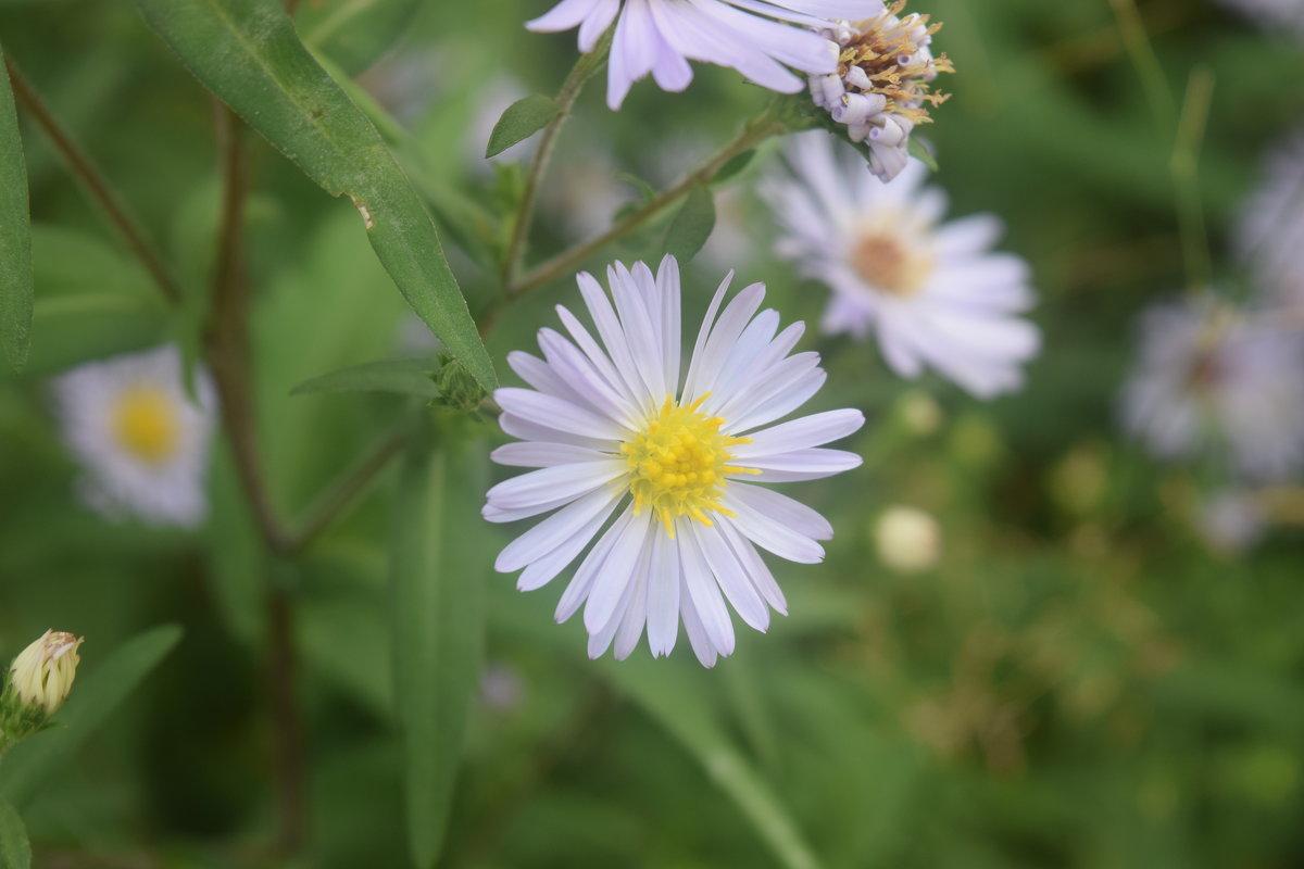 цветочек - константин Чесноков