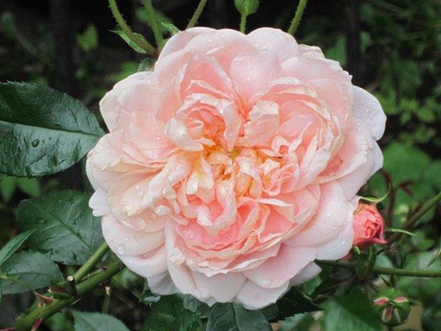Красивый цветок - Дмитрий Никитин